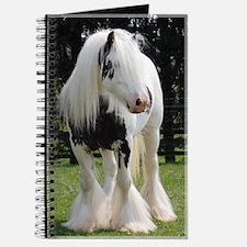Gypsy Horse Stallion Journal