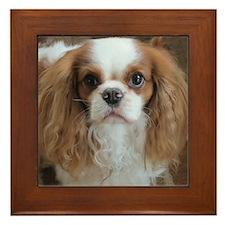 Cuddly Cavalier Chester's Framed Tile