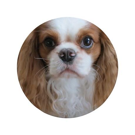 "Cuddly Cavalier Chester's 3.5"" Button"
