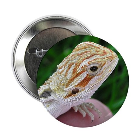Bearded Dragon 002 Button