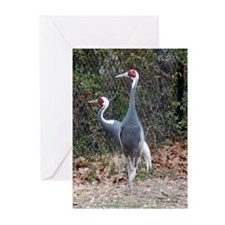 Greeting Cards (Pk of 10) - Chinese Cranes