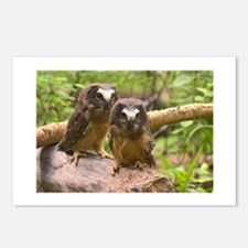 Baby Saw Whet Owls Postcards (Package of 8)