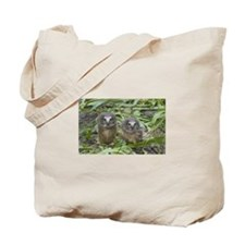 Baby Saw Whet Owls 2 Tote Bag