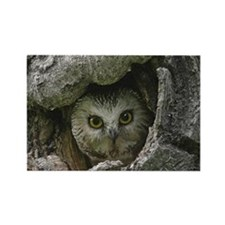Saw Whet Owl 2 Rectangle Magnet