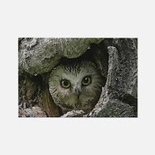 Saw Whet Owl 2 Rectangle Magnet