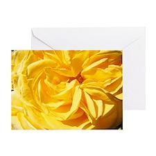 Rose Flowers Roses Greeting Card