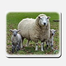 Sheep and Lambs 9R12D-35 Mousepad