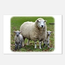 Sheep and Lambs 9R12D-35 Postcards (Package of 8)