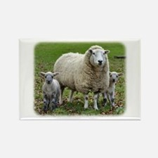 Sheep and Lambs 9R12D-35 Rectangle Magnet