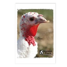 Eliza the Turkey Postcards (Package of 8)