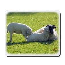 Sheep and lambs 8T54D-10 Mousepad