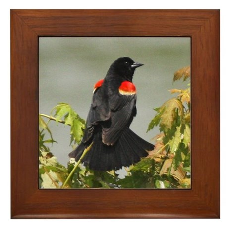 Redwing Perching Framed Tile