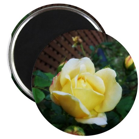 Friendship Rose Magnet
