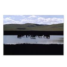 Mongolian Horses Postcards [8]