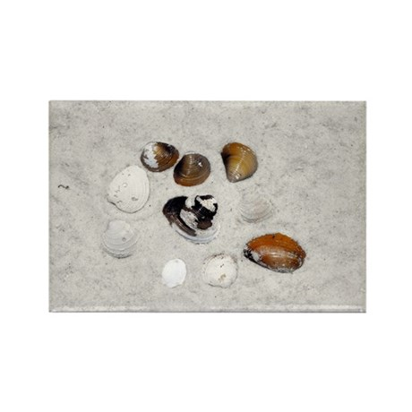 Seashells and Sand Rectangle Magnet