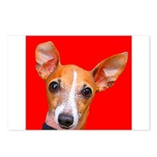 Italian Greyhound Postcards (Package of 8)
