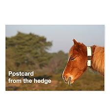 Pony postcards (pk of 8)