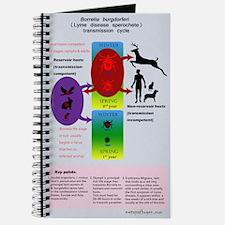 Lyme disease transmission pos Journal