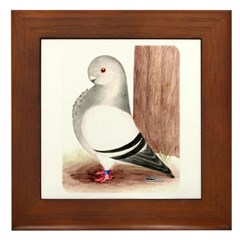 Blue Owl Pigeon Framed Tile
