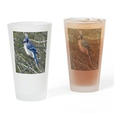 Blue Jay Drinking Glass