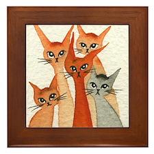 Chico Stray Cats