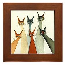 Seville Stray Cats
