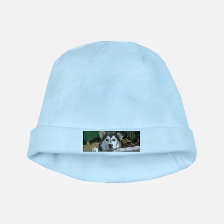 Alaskan Malamute baby hat