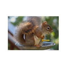 Red Squirrel I Rectangle Magnet