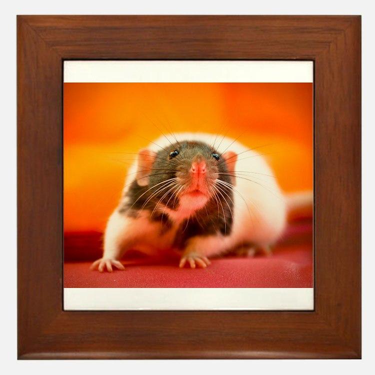Rat Framed Tile