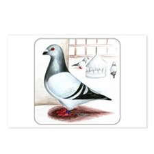 Giant Homer Pigeon Postcards (Package of 8)