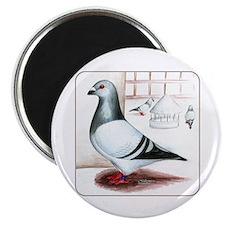 Giant Homer Pigeon Magnet