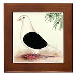 Saddle Homing Pigeon Framed Tile