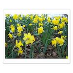 Daffodil Small Poster