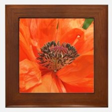 Orange Poppy Framed Tile
