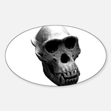 Chimpanzee Skull Oval Decal