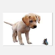Cute Lab Puppy Eyeing Blu Postcards (Package of 8)