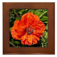 Poppy Framed Tile