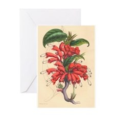 Antique Botanical--Red Flowers Greeting Card