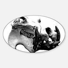 Hippopotamus Skull Oval Decal