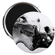 Hippopotamus Skull Magnet
