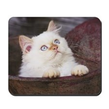 Mousepad - Kitten