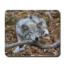 Mousepad - Resting