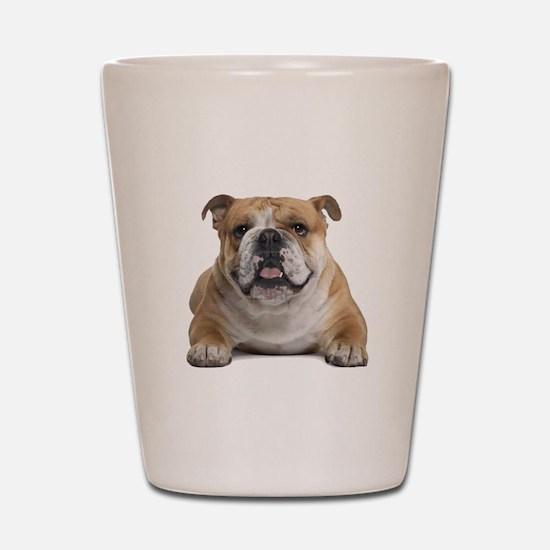 Cute English bulldog Shot Glass