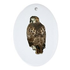 Red-tailed Hawk Ornament (Oval)
