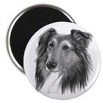 Shetland Sheepdog (Sheltie) Magnet