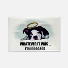 WHATEVER IT WAS IM INNOCENT Rectangle Magnet