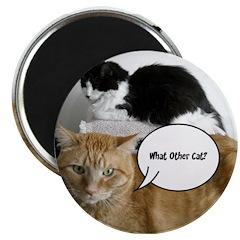 Orange Tabby Cat Humor 2.25
