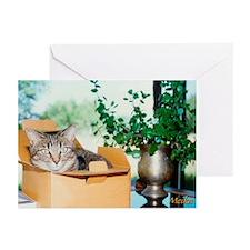 Meika Boxed Greeting Cards (Pk of 10)