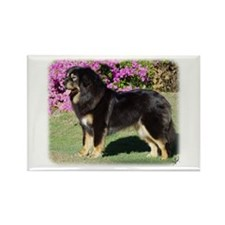 Tibetan Mastiff AA019D-101 Rectangle Magnet (100 p