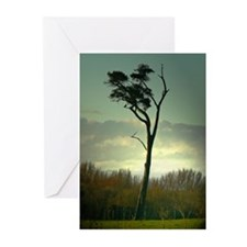 Lone Tree Blank Greeting Cards (Pk of 10)